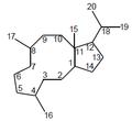 Neodolabelano - Numeración.png