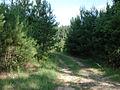 Neshoba County Hwy 21 South Old Trail Entrance (2).JPG