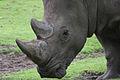 Noorder dierenpark (3986858397).jpg