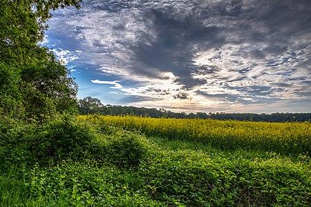 Nature reserve Ichterloh, Nordkirchen, North Rhine-Westphalia, Germany