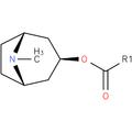 O-acylpseudotropine.png