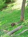 OKC Zoo May 2007 - 64 (497243549).jpg
