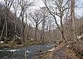 Oisase stream , 奥入瀬渓流 - panoramio (15).jpg