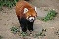 Oji zoo, Kobe, Japan (1505476254).jpg