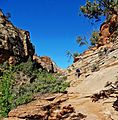 On the Trail, Zion NP 5-14 (20521050030).jpg