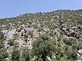 Orakzai Agency, Pakistan - panoramio (9).jpg