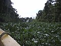 Orinoco Delta - panoramio.jpg
