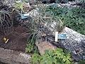 Orto botanico di Napoli 59.jpg