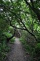 Ostseeinsel Hiddensee - Vom Dornbusch auf dem Steilufer nach Kloster - panoramio.jpg