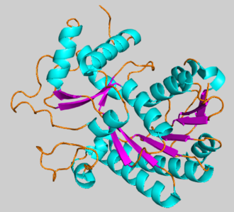 Cinnamoyl-CoA reductase - Tertiary structure of CCR1 from Petunia x hybrida colored by secondary structural element, generated from 4R1S