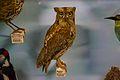 Owl (6915995535).jpg