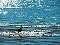 Pássaro sob os aguapés.jpg