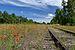 Põldmagun (Papaver dubium) raudtee ümbruses.JPG