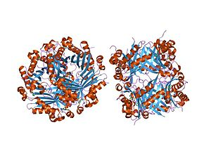 Dihydroneopterin aldolase - crystal structure of 7,8-dihydroneopterin aldolase in complex with guanine