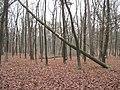 PP Černý orel, les IX.jpg