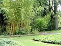 Palmengarten Frankfurt - DSC01959.JPG