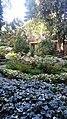 Panoramica del giardino.jpg