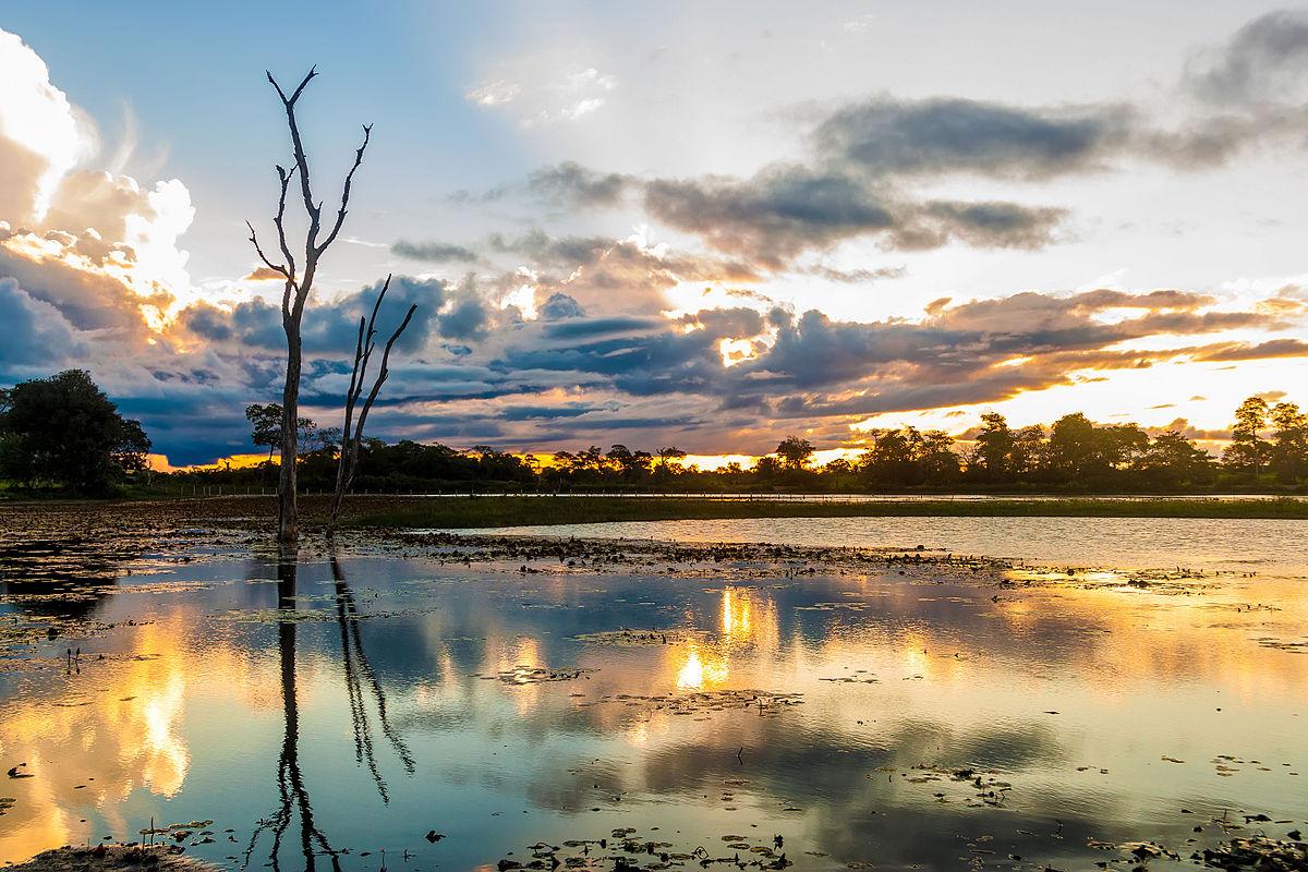 Pantanal wikip dia a enciclop dia livre for 10 pics
