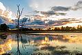 Pantanal em Mato Grosso Brasil.jpg