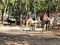 Parc animalier de Taza 24.jpg