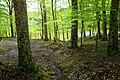 Parco-nazionale-del-gargano2.jpg