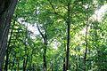Parcul Copou (perspectivă cu arbori).jpg