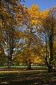 Park - panoramio (83).jpg