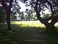 Part of Barnes Common. - geograph.org.uk - 27865.jpg