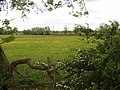 Pasture with buttercups, near Swanbourne - geograph.org.uk - 438739.jpg