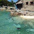 Penguin Coast, Maryland Zoo in Baltimore.JPG