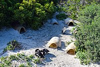 Penguins at Boulders Beach, Cape Town (3).jpg