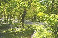 Penrose woods - geograph.org.uk - 649611.jpg