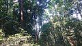 Perjalanan Ke Curug Cipaniis (8), Melihat pemandangan bagian atas.jpg
