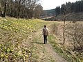 Perlenbachtal im März 2014.jpg