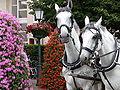 Pferdegespann Hochzeitskutsche.JPG