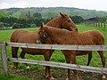 PferdekoppelHagenTW.JPG