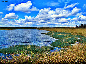 Phinizy swamp nature park floodplain in hdr.jpg