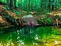 Photo-OutdoorImage-Spring-Green.jpg