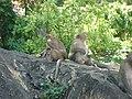 Phra Nakhon Khiri historical park 10.JPG