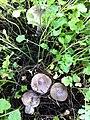 PikiWiki Israel 28893 Couple of Mushrooms.JPG