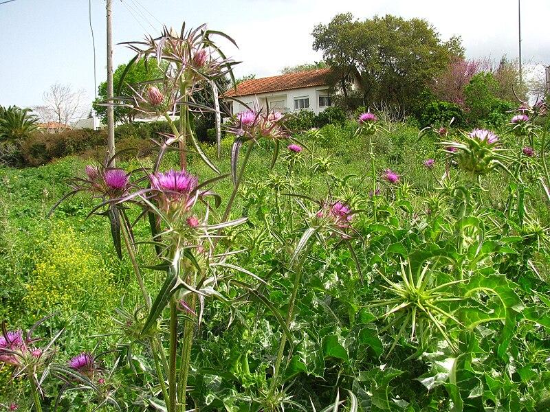 שדות בית לחם הגלילית