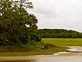 Pinckney Island National Wildlife Refuge (5957933021).jpg