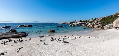 Pingüinos de El Cabo (Spheniscus demersus), Playa de Boulders, Simon's Town, Sudáfrica, 2018-07-23, DD 39.jpg