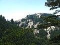 Pinus tabuliformis Hua Shan6.jpg