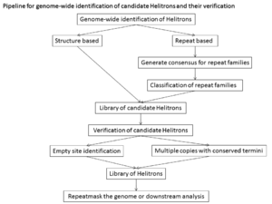 Helitron (biology) - Pipeline for genome-wide identification of candidate Helitrons and their verification