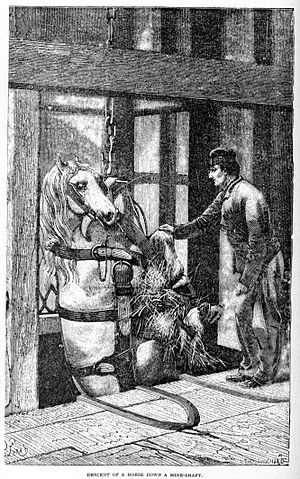 Pit pony - Nineteenth-century illustration of a pony being lowered down a mine shaft at Creuzot, France.