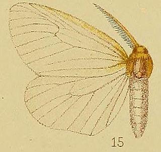 <i>Olapa</i> (moth) Genus of moths