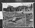 Plaatjes uit Nieuw Guinea , Hollandia ontginning, Bestanddeelnr 906-8660.jpg