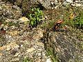 Plants (22).JPG