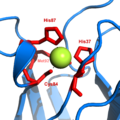 Plastocyanin copper binding.png